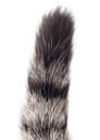 tail of a cat on a white background