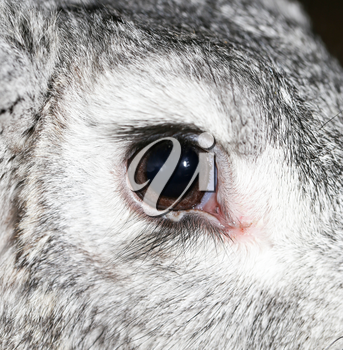 a rabbit's eye on the farm. macro