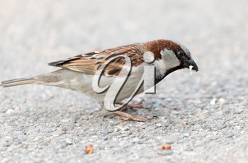 sparrow on the ground in nature