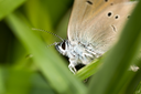 butterfly in nature. macro