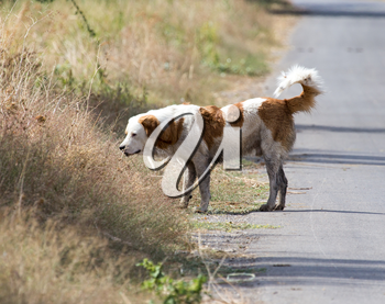 Dog on the road in nature