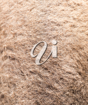 camel wool as background