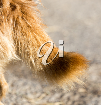 dog's tail in nature