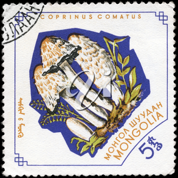 MONGOLIA - circa 1964: A Stamp printed in MONGOLIA shows image of the Coprinus comatus, from the series Mushrooms, circa 1964