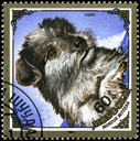 MONGOLIA - CIRCA 1984: A Stamp printed in MONGOLIA shows image of a Puppy from the series