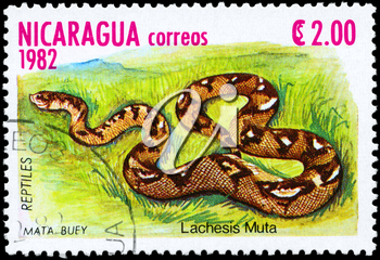 NICARAGUA - CIRCA 1982: A Stamp printed in NICARAGUA shows the image of a Bushmaster with the description Lachesis muta from the series Reptiles, circa 1982
