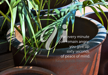 Royalty Free Photo of a Potted Plant And Emerson Quote
