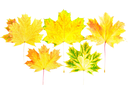 Background, wallpaper-perfect autumn leaf over white. Isolated