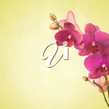 textured old paper background with orchid