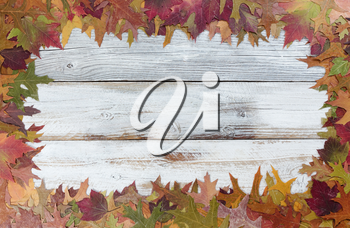 Autumn Thanksgiving foliage background on white rustic wood. Complete outside border with copy space in middle