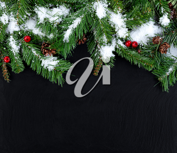 Snow covered evergreen tree branches for Christmas or New Year holiday concept