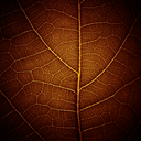 abstract leaf vein texture