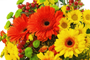 Colorful bouquet from gerbera flowers isolated on white background. Closeup.