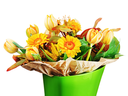 Colorful bouquet from tulips and gerbera flowers isolated on white background. Closeup.