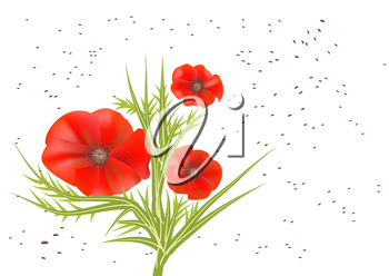 poppy seeds with poppy flower on a white background