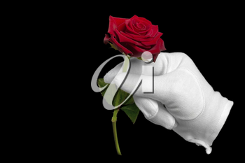 A single red rose being presented by a hand in a white glove isolated on a black background.