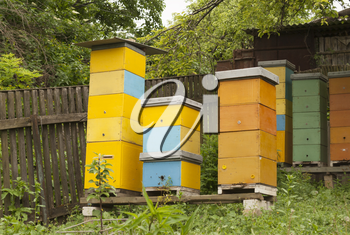 Apiary on a country site