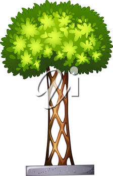Illustration of a landscaping plant on a white background