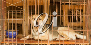 Dog in a cage in Vietnam. In Vietnam dogs are often used for consumption.