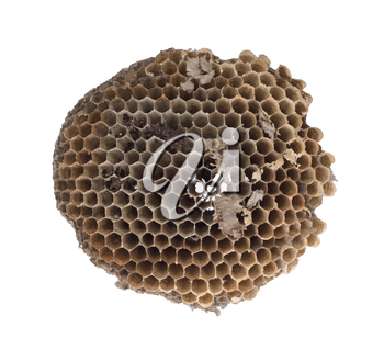 Old honeycomb isolated on a white background