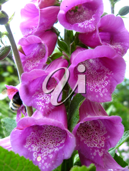 image with beautiful flower of lilac bluebell