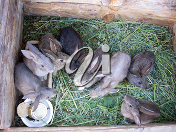 brood of the little young amusing rabbits