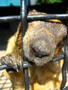 The image of muzzle of steppe marmot