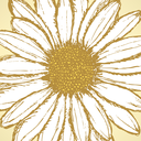 Daisy flower, vector sketch background eps 10