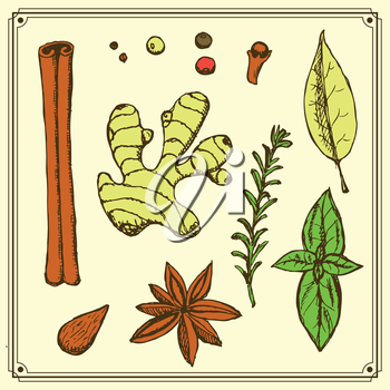 Sketch spices and herbs in vintage style, vector