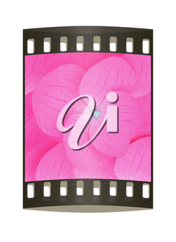 Flowers beautiful petals pink background. The film strip
