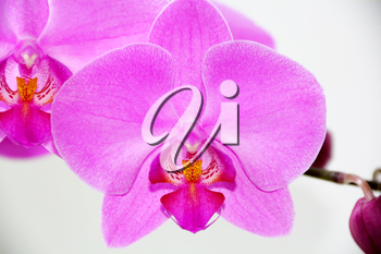 Image of beautiful orchid