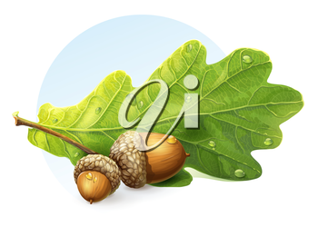 Royalty Free Clipart Image of Acorns and a Leaf