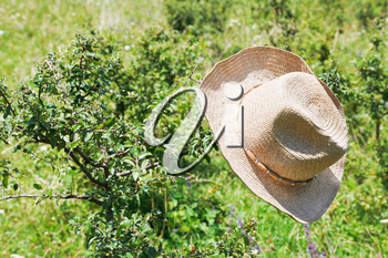cowboy hat hangs on thorn bush in sunny day