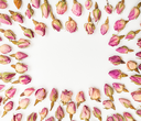 frame from many natural pink rose flower buds close up on white textured paper background
