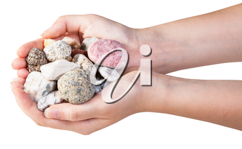 above view of various natural pebbles in handful isolated on white background