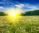 Summer blooming green meadow field with flowers with sun and blue sky