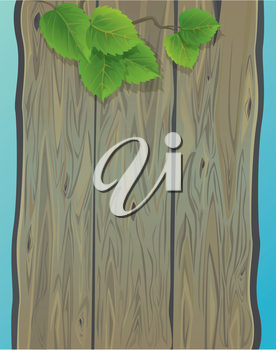 Wooden wall and green spring leaves of birch. Background with empty space for your text