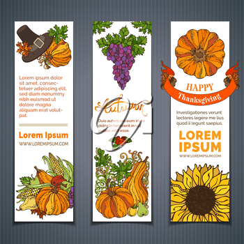 Traditional harvest autumn symbols. Pilgrim hat, pumpkin, corn, grape, sunflower, apple and pear, cranberry autumn leaves and others
