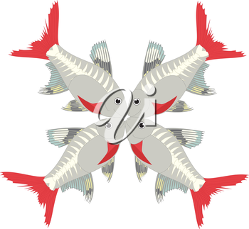 Royalty Free Clipart Image of X-ray tetras making the letter 'X'