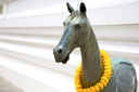 horse  in the temple bangkok asia   thailand abstract cross      colors step   wat  palaces