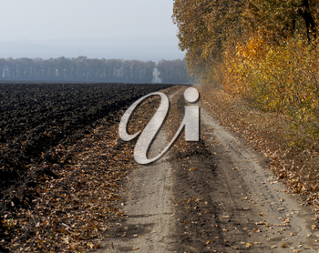 the plowed field and the earth road at an oak grove, a subject fall and the nature