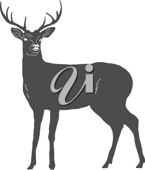 Hand drawn deer isolated on white background. Vector illustration
