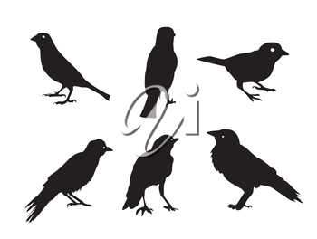 Birds Silhouettes Isolated on White Vector Illustration EPS10