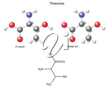 Threonine (Thr) - chemical structural formula and models, amino acid, in vacuo, zwitterion, 2D and 3D illustration, balls and sticks, isolated on white background, vector, eps8