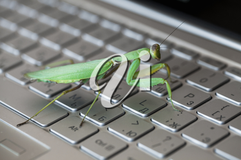 Software bug metaphor, mantis walks on a laptop keyboard with English and Russian letters