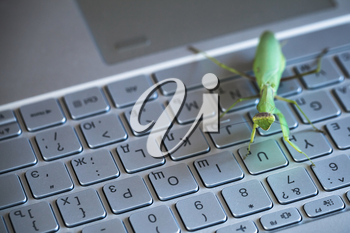 Software bug metaphor, mantis sitting on a laptop keyboard with English and Russian letters