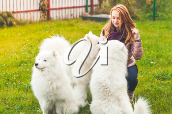 Caucasian girl with white Samoyed dogs walk in park, outdoor portrait