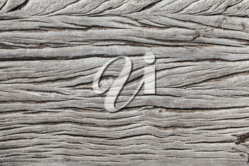 Dry weathered gray wooden plank background, close-up photo texture