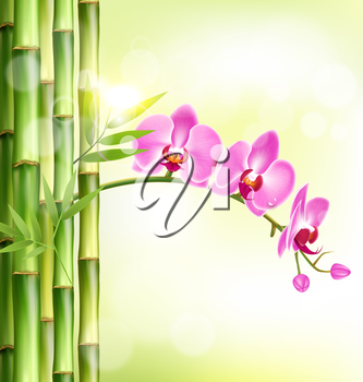 Orchid pink flowers with bamboo and sunlight on light-green background