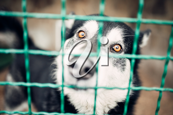 Cute pet face behind bars in veterinary clinic, no people. Vet hospital, treatment a sick patient